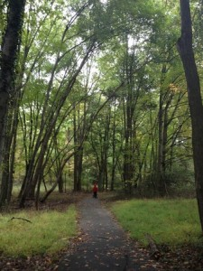 Tysons' Last Forest